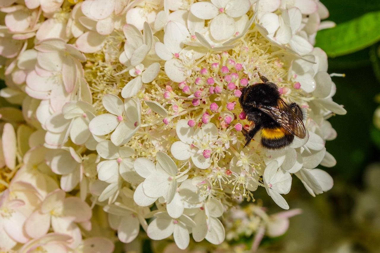 蜜を吸う蜂