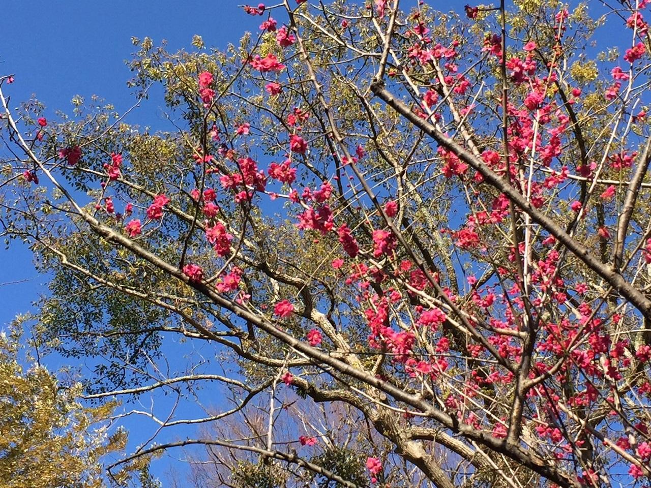 横須賀満願寺の木